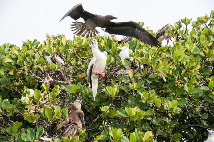 "Aldabra Island, Seychelles -- from the peanut gallery: ""Get 'em, get 'em!"""