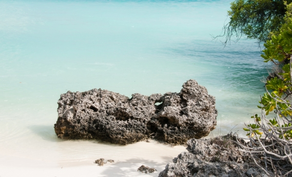 Aldabra Island, Seychelles -- Turquoise water and coral