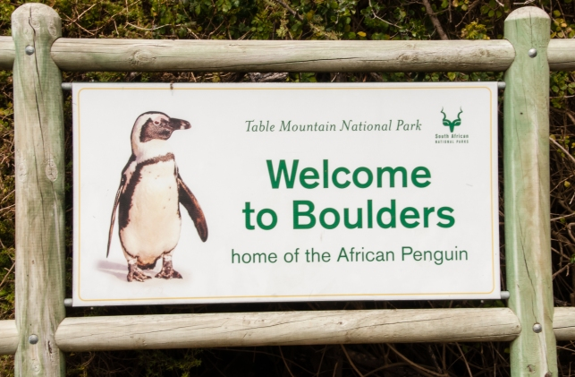 Welcome to Boulders -- home of the African Penguin