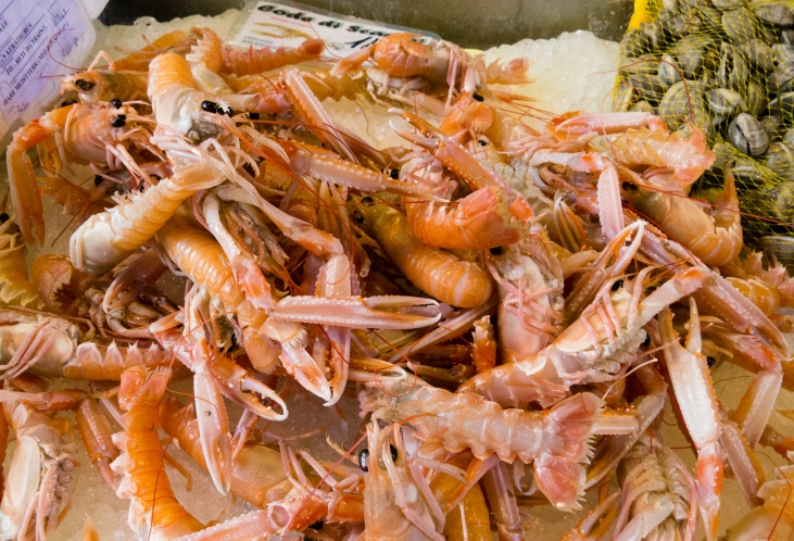 Fresh scampi at the Rialto Market, Venice, Italy