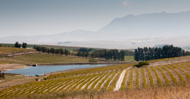 The Sadie Family vineyards, The Swartland Region, Western Cape, South Africa