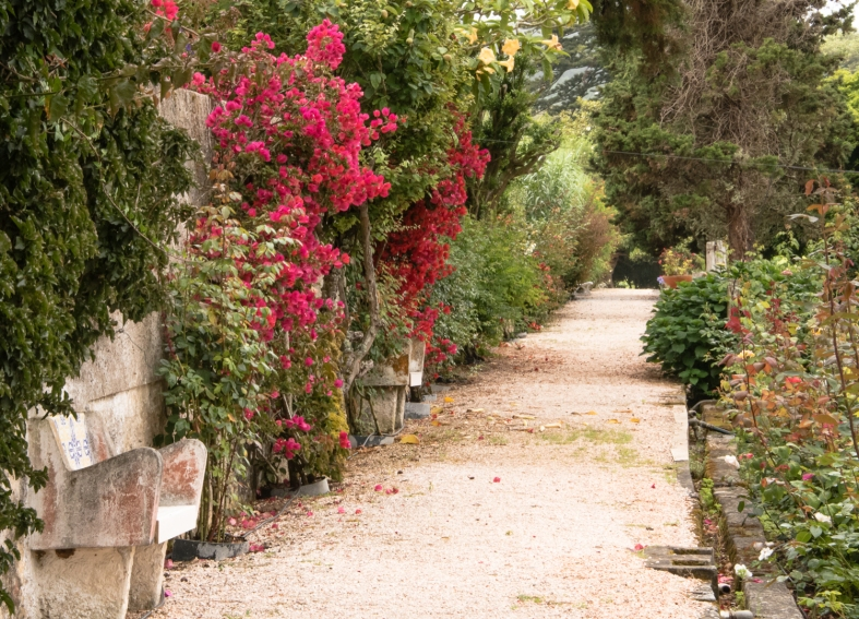 A lane in the extensive rose gardens at Casal Sta. Maria, near Cabo da Roca, Colares, Portugal