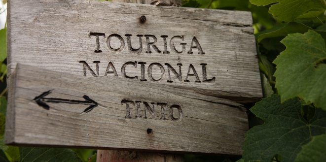 Touriga Nacional Tinto (red) vineyard sign at Casal Sta. Maria, near Cabo da Roca, Portugal