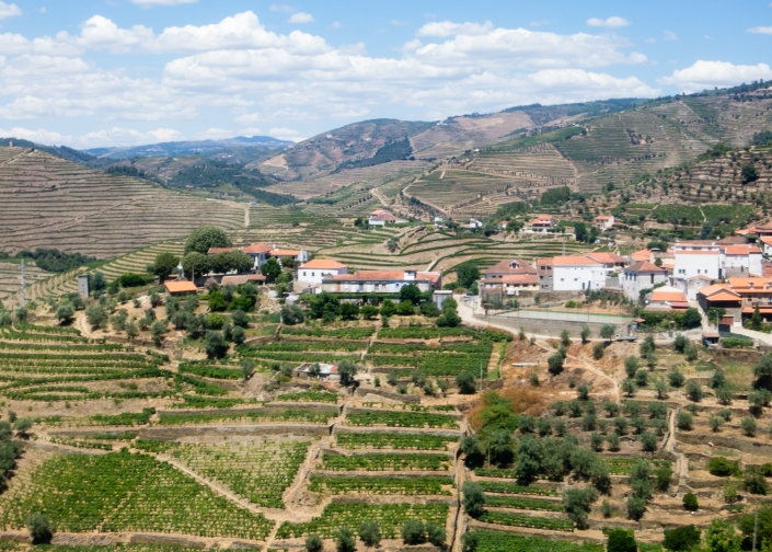 A landscape of terraced vineyards in the Douro Valley, Portugal
