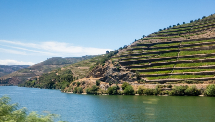 Terraced vineyards overlooking the Douro River in the Douro Valley, Portugal