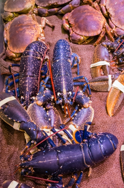 Rare Homard Bleu des Glenan (blue NorthEast Atlantic lobsters) at the local market's Poissonnier de Bretagne (Brittany fishmonger), Concarneau, France