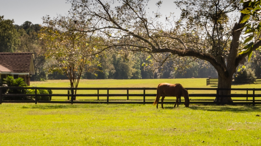Horse corral at Boone Hall Plantation, Charleston, South Carolina, USA