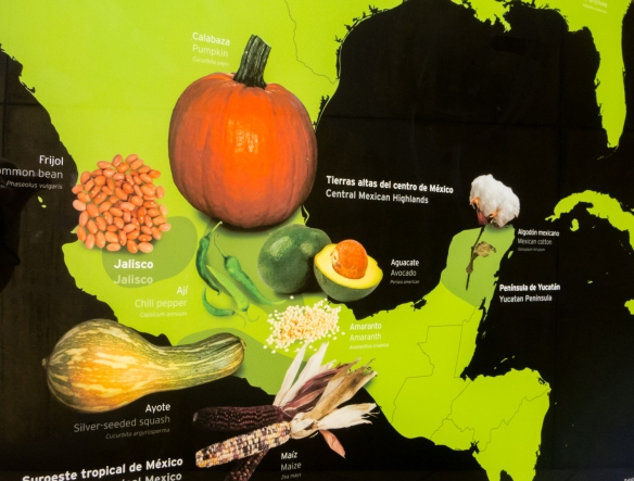 "BioMuseo -- ""The Human Path"" (foods with origins in Mexico); Panama City, Panama"