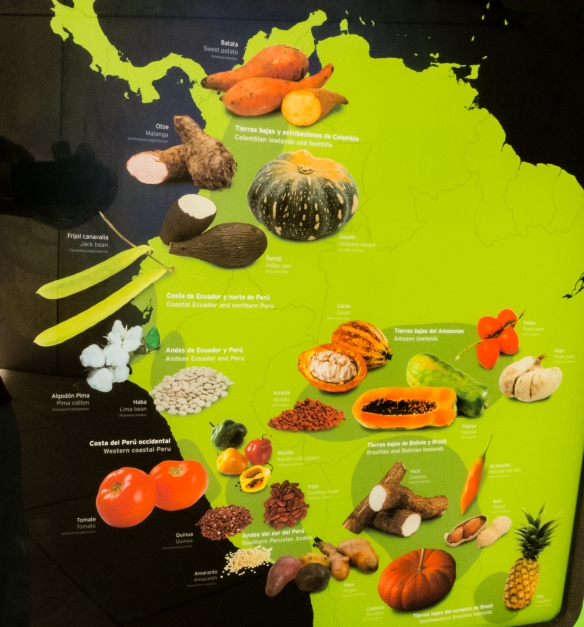 "BioMuseo -- ""The Human Path"" (foods with origins in South America); Panama City, Panama"