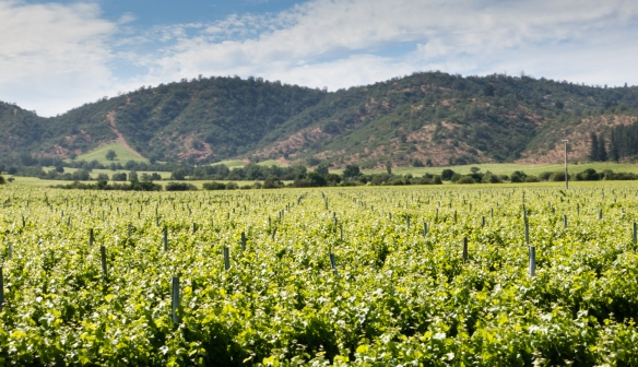 Just 15 miles from the Pacific Ocean, Loma Larga was the first winery in the Casablanca Valley to plant red varieties, Lo Ovalle, Chile
