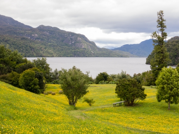 A flowering meadow overlooking Riesco Lake in Parque Aiken del Sur, Puerto Chacabuco, Patagonia, Chile