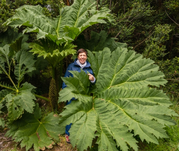 "After falling through the rabbit hole, ""Alice"" was dwarfed by the local ferns in Parque Aiken del Sur, Puerto Chacabuco, Patagonia, Chile"