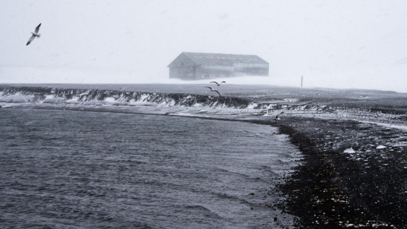 An abandoned whaling station building viewed from the shore in a blizzard, Deception Island, South Shetlands Archipelago, northwest of the northern tip of the Antarctic Peninsula