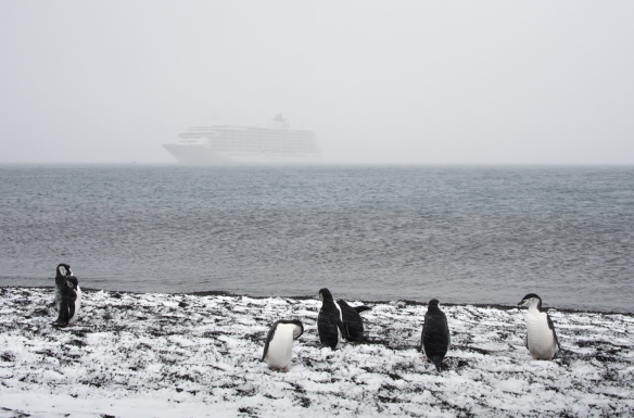 Chinstrap Penguins cavorting on the shore with our ship barely visible in the blizzard, Deception Island, South Shetlands Archipelago, northwest of the northern tip of the Antarctic Peninsula