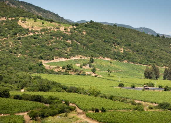 Lapostelle's Apalta Vineyard is located in the wine-producing region of Colchagua Valley, 42 miles (68 km) away from the Pacific Ocean, between the Andes mountain range and the coastal cordillera, Santa Cruz, Chile
