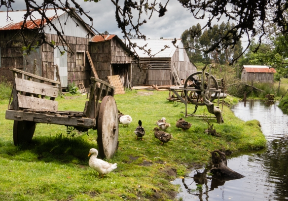 Outer farm buildings and one of the irrigation channels dug decades ago by the founder, Rilán Peninsula, Chiloé Island, Patagonia, Chile