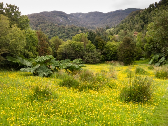 The forested nature trail ended in a flowering meadow just before reaching Riesco Lake in Parque Aiken del Sur, Puerto Chacabuco, Patagonia, Chile