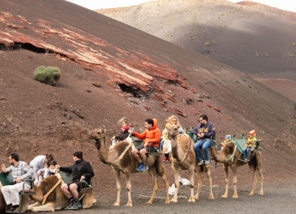Camels discharging their passengers after touring the volcanic landscape of Parque Nacional de Timanfaya (Timanfaya National Park), Lanzarote, Canary Islands