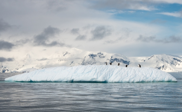 Iceberg with Gentoo Penguins in Dallmann Fjords off Northern Anvers Island, Antarctica