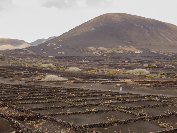 Like the Parque Nacional de Timanfaya, Bodega la Geria (wine-making region), is entirely made up of volcanic soil, Lanzarote, Canary Islands