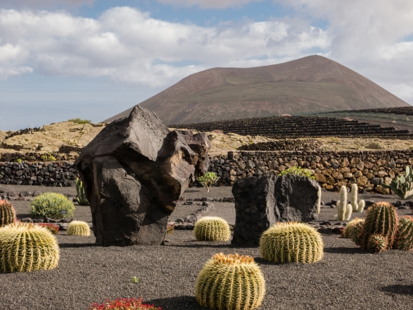 The cactus garden at Bodegas El Grifo, Lanzarote, Canary Islands