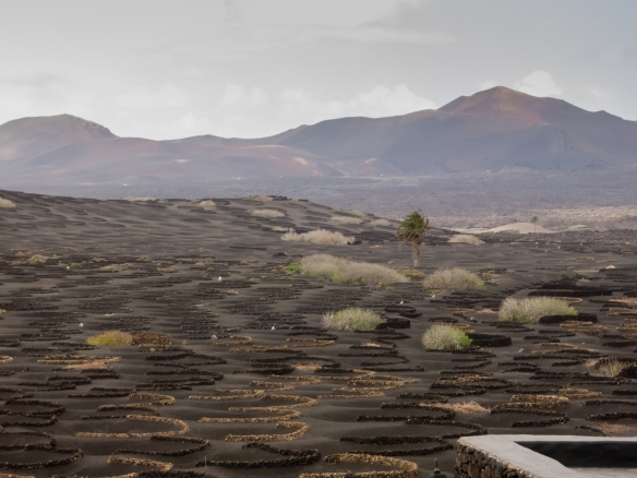 The Island of Lanzarote has its very own wine-making region, called Bodega la Geria, Canary Islands