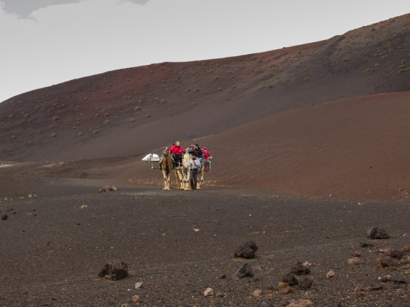 The most popular way to tour the volcanic landscape of Parque Nacional de Timanfaya (Timanfaya National Park) is by camel, Lanzarote, Canary Islands