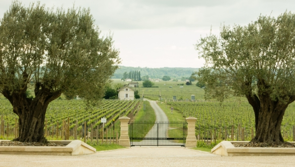 The view of the downslope vineyards from the front entrance of Château Pavie, Saint-Émilion, Bordeaux region, France