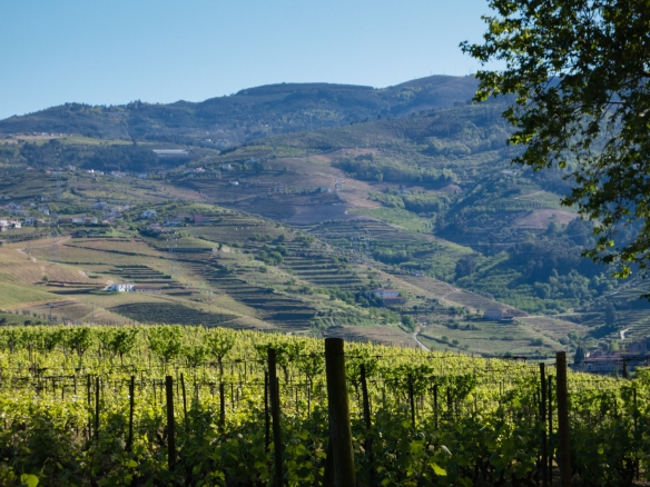 Vineyards in the hills of the Douro Valley, Portugal