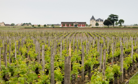 Vineyards of Château Cheval Blanc, Saint-Émilion, Bordeaux region, France, overlooking a neighboring Château