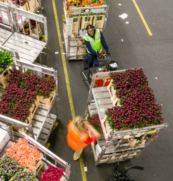 After flowers have been purchased, they are moved around the warehouse to delivery points where they are trucked to the buyers, Royal FloraHolland Aalsmeer, Amsterdam, Netherlands