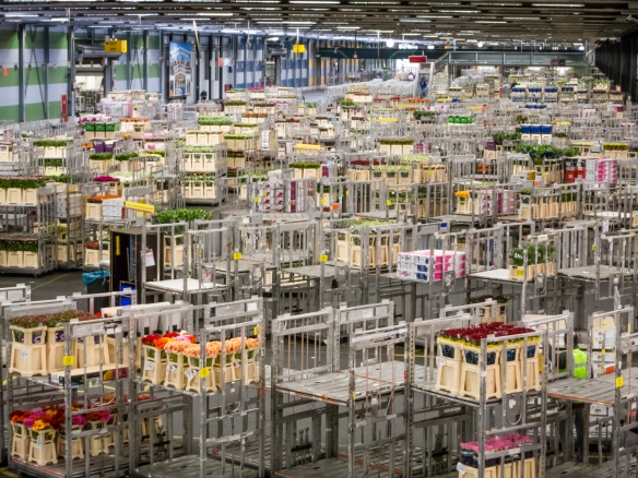 How many soccer fields are the equivalent to the gigantic warehouses of the Royal FloraHolland Aalsmeer facility?  Try a bigger number… Two-hundred-twenty soccer fields.  Yes, 220; Amsterdam, Netherlands