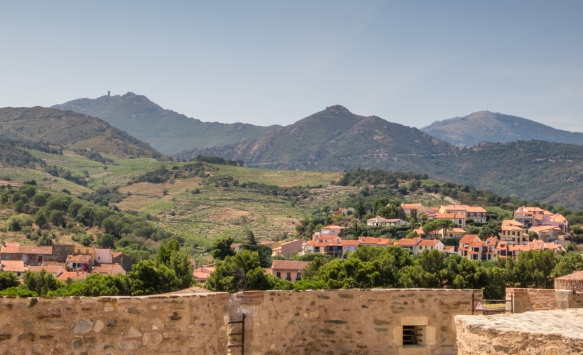 A view of the vineyards and homes behind the Chateau Royal de Collioure (Collioure Royal Castle), Collioure, France