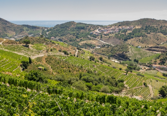The vineyards in the hills above Collioure, France are planted to Rhone-style grape varietals (e.g., Grenache, Mouvedre, Syrah, etc.) that are used in the production of crisp, refreshing Rose wines (which we enjoyed over several lunches)