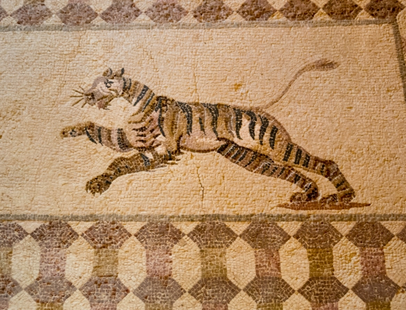 a-tiger-in-a-long-hunting-scene-mosaic-in-the-house-of-dionysos-a-luxurious-roman-residence-built-during-the-end-of-the-2nd-century-a-d-kato-pafos-archaeological-site-cyprus