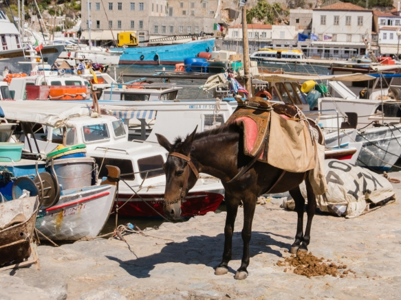 mules-and-donkeys-provide-the-primary-mode-of-transportation-as-internal-combustion-vehicles-have-been-banned-on-the-island-for-many-years-hydra-greece