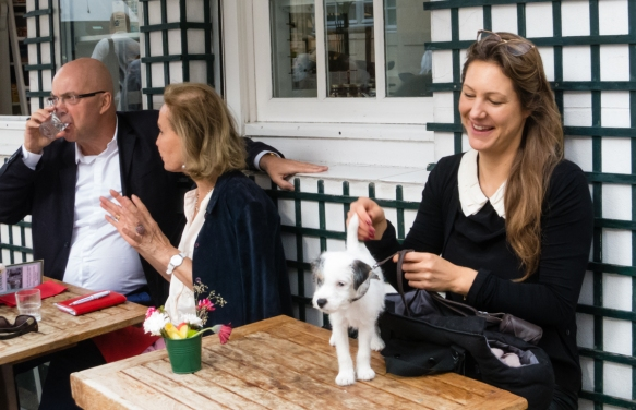 as-we-were-walking-around-the-saint-germain-des-pres-neighborhood-we-came-across-a-cafe-with-outdoor-tables-note-that-is-a-standard-practice-and-legal-for-dogs-to-join-their-owners