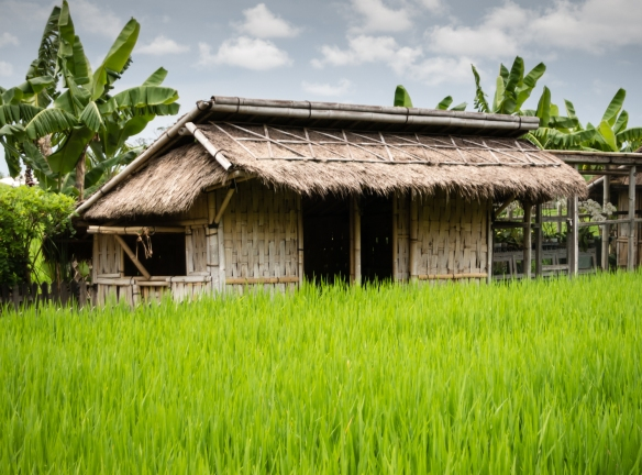 a-typical-rice-field-with-a-farm-structure-bali-indonesia