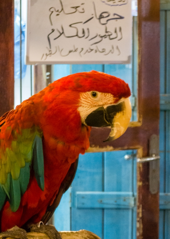 another-corner-of-souq-waqif-specializes-in-birds-and-bird-cages-including-exotic-species-doha-qatar