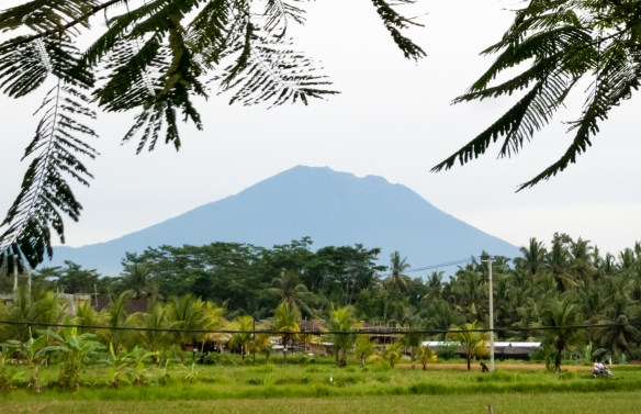 in-the-distance-is-mount-batur-an-active-volcano-located-at-the-center-of-two-concentric-calderas-north-west-of-mount-agung-on-the-island-of-bali-the-mountain-is-a-very-popular-hiking-destination