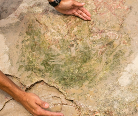 pictured-is-a-footprint-discovered-by-our-guide-bart-of-a-theropod-dinosaur-a-bipedal-two-legged-ancestrally-carnivorous-dinosaur-that-had-comparatively-small-forelimbs-and-walked-er