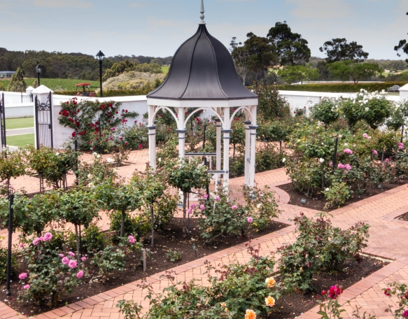 the-formal-rose-garden-on-the-grounds-of-voyager-estate-winery-margaret-river-region-australia