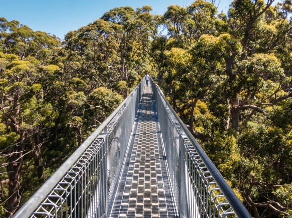 the-tree-top-walk-is-a-600-meter-1969-foot-loop-along-a-raised-suspended-walkway-reaching-up-to-40-meters-131-feet-above-the-ground-in-a-forest-of-indigenous-red-tingle-trees-in-the-valley-of-th