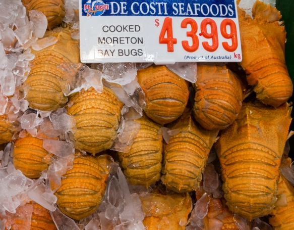 cooked-morton-bay-bugs-a-shellfish-delicacy-that-tastes-like-lobster-found-around-the-cold-waters-of-south-east-australia-looking-like-a-trilobite-a-fossil-group-of-extinct-marine-arthropods_
