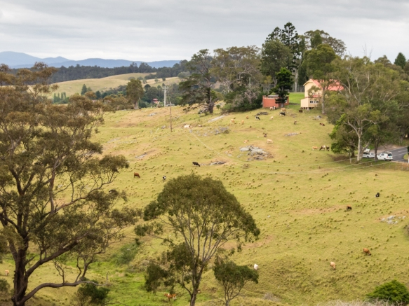 just-outside-the-town-of-central-tilba-on-rolling-hills-is-the-tilba-real-dairy-new-south-wales-australia