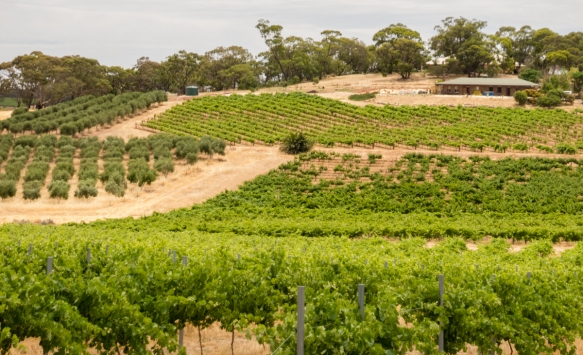 one-portion-of-the-louise-estates-vineyards-barossa-valley-adelaide-south-australia-australia