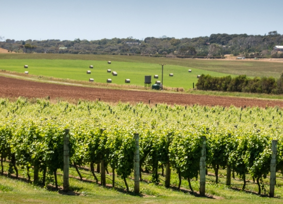 vineyards-at-ghost-rock-winery-in-port-sorell-tasmania-australia