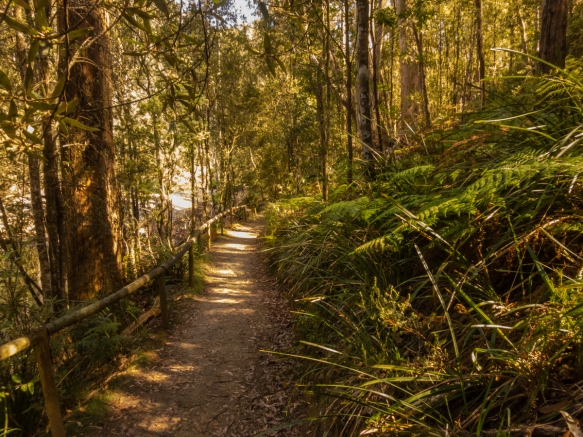 a-portion-of-the-walking-track-along-the-emu-river-in-fern-glade-reserve-burnie-tasmania-australia