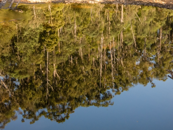 an-upside-down-reflection-in-the-emu-river-of-trees-in-fern-glade-reserve-burnie-tasmania-australia