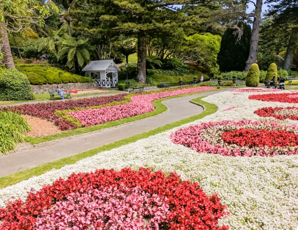 beautiful-blooming-flowers-form-colorful-designs-at-the-lower-entrance-to-the-wellington-botanic-gardens-wellington-new-zealand